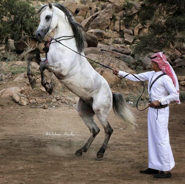 Pin By Nadih Koko On Kingdom Of Saudi Arabia In 2020 Horses Animals Photography