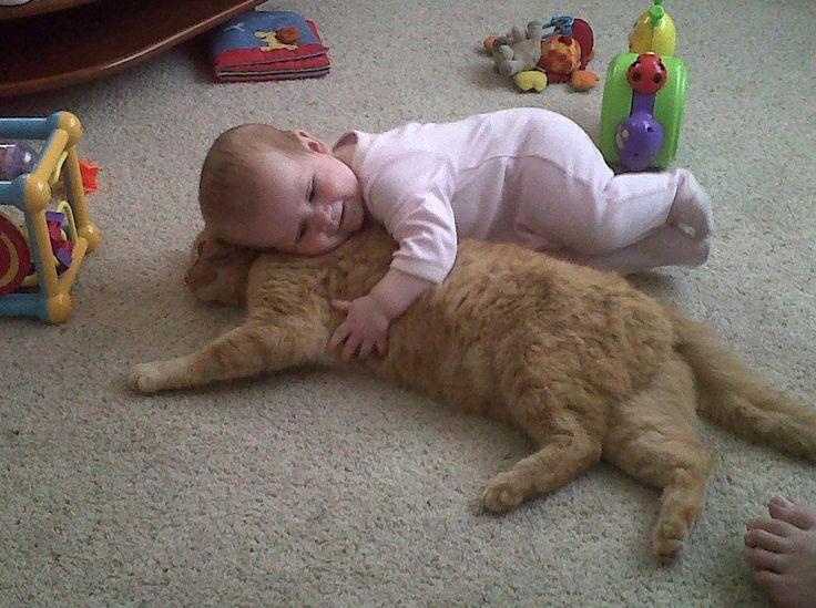 funny kittens - Risultati Yahoo Italia della ricerca di immagini