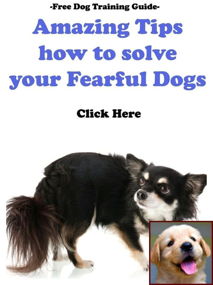 Learning To Train A Disobedient Dog Dog Training Dog Behavior Dogs