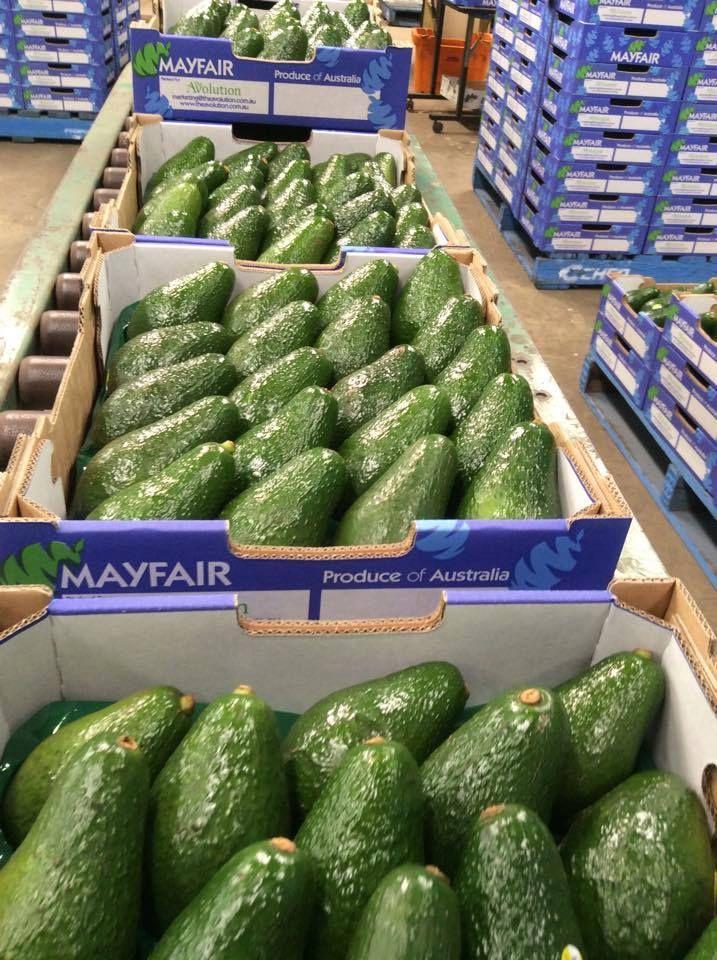 Mayfair Sunnyspot Shepard Avocados 2