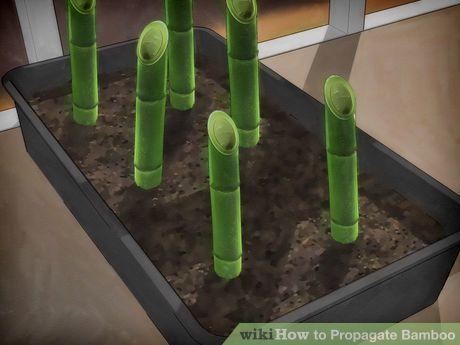 Best 25 Bamboo Garden Ideas On Pinterest Bamboo Screening - bamboo plants garden design