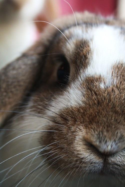 Colin's Closeup