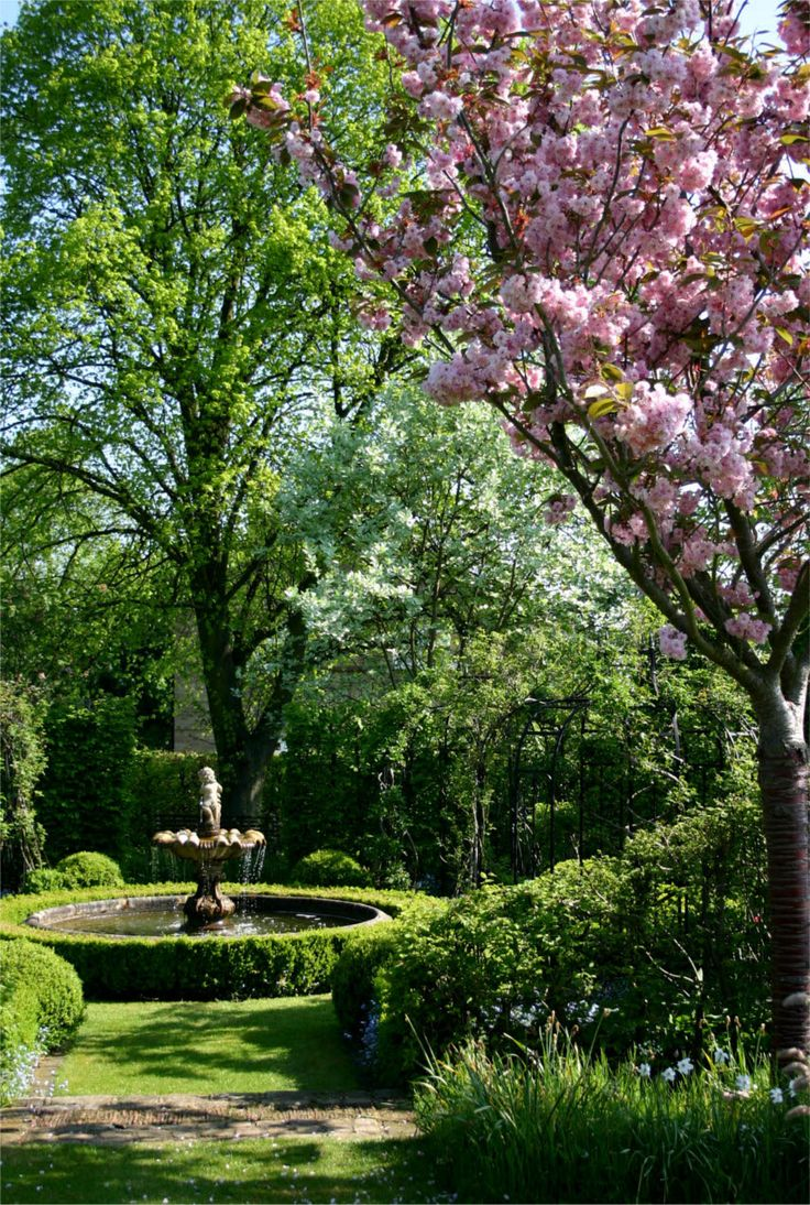 Fountain with cherry blossom. The Manor House,  Stevington,  England