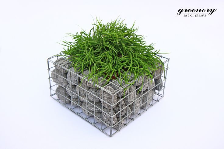 Gabion pot with anthracite pebbles – Gabion creations by greenery #gabion #gabioncreations #pots #greenery #airplants #succulents #cactus #plants #chania #greece
