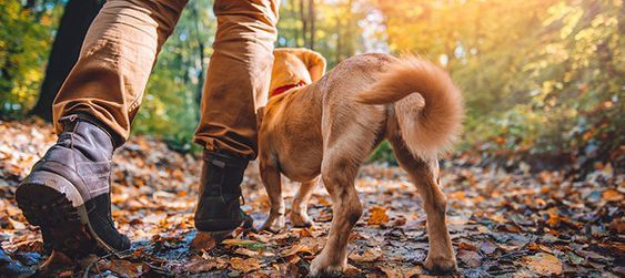 Best Dog Friendly Camping In Southern California Dog Vacations
