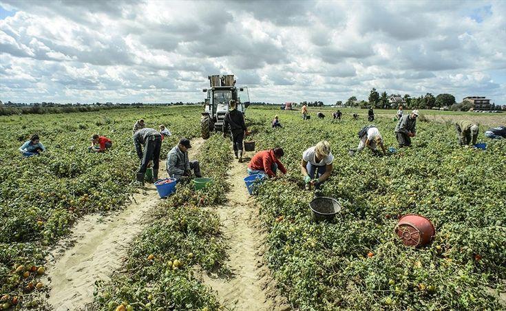 Approvata la legge sul caporalato: mai più schiavi nei campi? - di Fulvio Rocco de Marinis