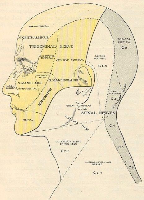 facial nerve sensory distribution jpg 1500x1000