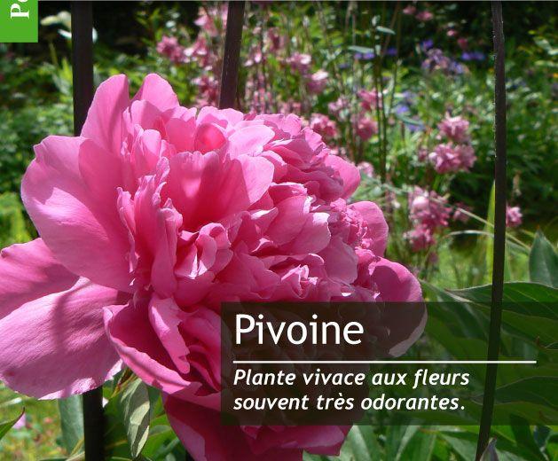 1000 id es sur le th me calendrier mai 2016 sur pinterest calendrier juillet 2016 calendrier - Petit jardin graines et plantes le havre ...
