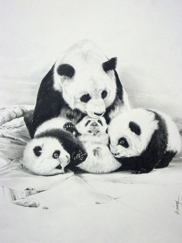 """""""Panda Family"""" by Karine VILLARD. Pencil drawing on Paper, Subject: Animals and birds, Impressionistic style, One of a kind artwork, Signed certificate of authenticity, This artwork is sold unframed, Size: 35 x 40 cm (unframed), 13.78 x 15.75 in (unframed), Materials: Paper Fabriano"""