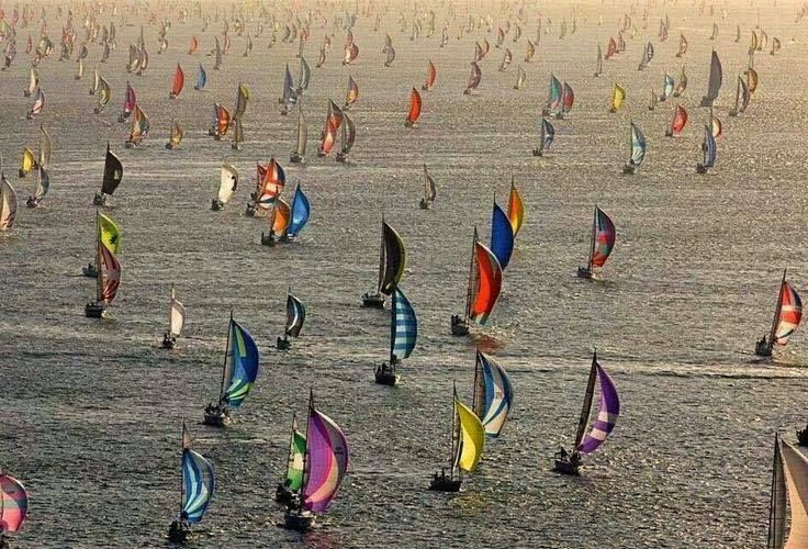 Spinnakers Boats  race