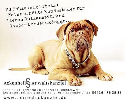 Hundesteuer : Keine erhöhte Hundesteuer für Bullmastiff  wenn.. #Ackenheil Anwaltskanzlei #Hunderecht #Hundesteuer - bundesweite Rechtsberatung - kostenlose tel. Ersteinschätzung Terminvergabe unter: 06136 - 76 28 33