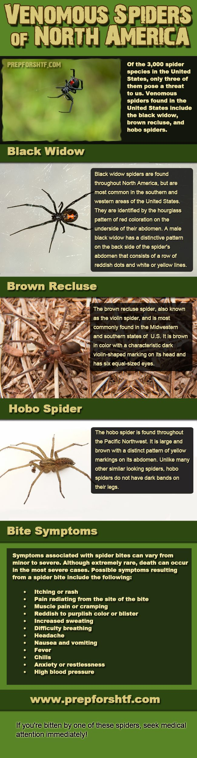 Venomous Spiders of North America Infographic