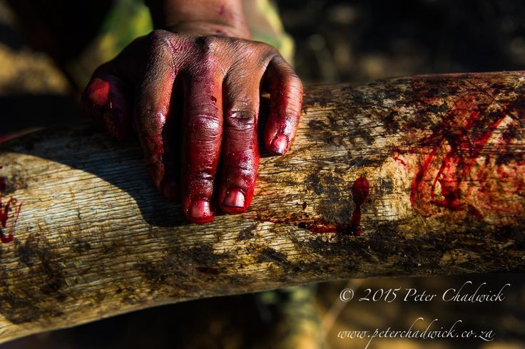 Blood Ivory by Conservation Photographer Peter Chadwick