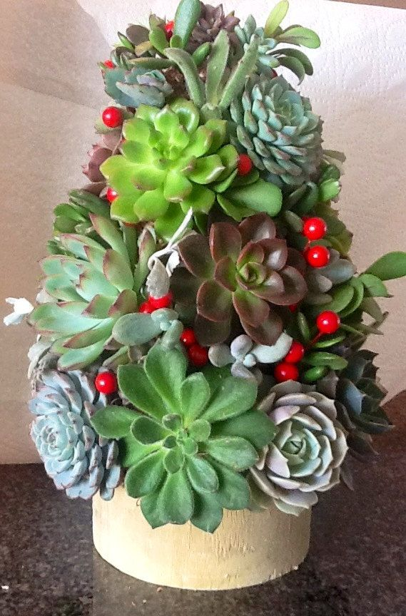 Diy Succulent Topiary Tree Tabletop Garden Christmas