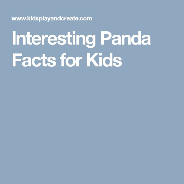 Interesting Panda Facts for Kids