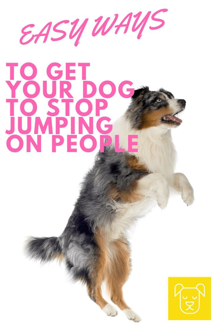 The Easiest Way To Teach Your Dog Not To Jump On People Dog