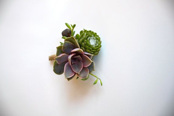 Violet rose boutonnière succulente de suif Berry