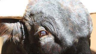 1000+ ideas about Bucking Bulls on Pinterest | Bull riders ...