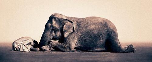 EL ELEFANTE ENCADENADO... - <BR> <BR> <BR>Lo que mas le gustaba del circo lo que mas los animales y entre todos ellos había uno especial, el elefante. <BR> <BR>Durante su función, hacia despliegue de su tamaño y fuerza.....pero una vez terminado el elefante quedaba sujeto tan solo por una cadena que aprisionaba una de sus patas a una pequeña estaca clavada en el suelo. El misterio era evidente ¿Como un animal tan grande se quedaba sujeto sin moverse atado tan solo a un trozo de madera?, lo…