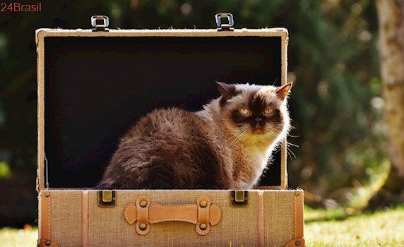 Conheça cuidados a serem tomados com gatos após mudança de endereço