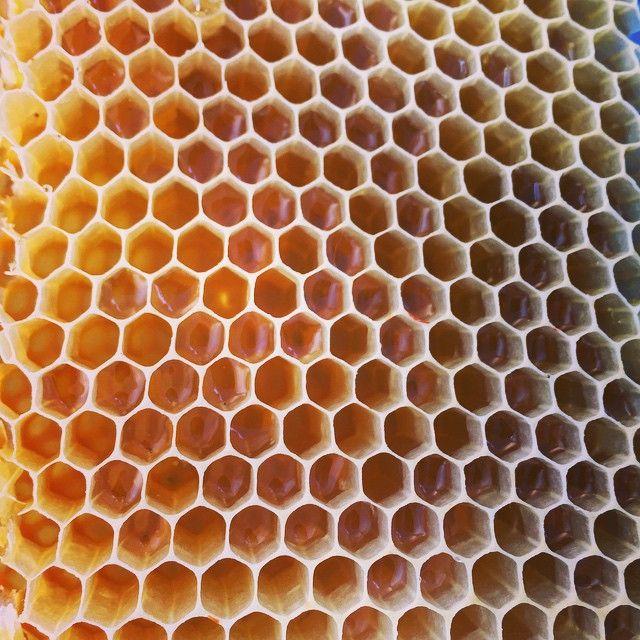 #Panal de #miel en #Benialí #ValldeGallinera #MarinaAlta #Alicante #Spain #Cherries #Cherry #party #festadelacirera #valterra #turismo #turismorural #rural #casa #casarural #tradiciones #agua #pueblos #mediterráneo #honey