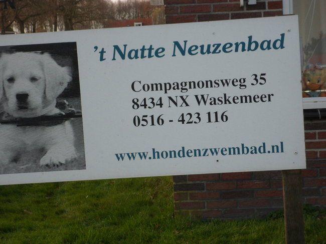 Waskemeer in Friesland zwembad voor honden - Google Search