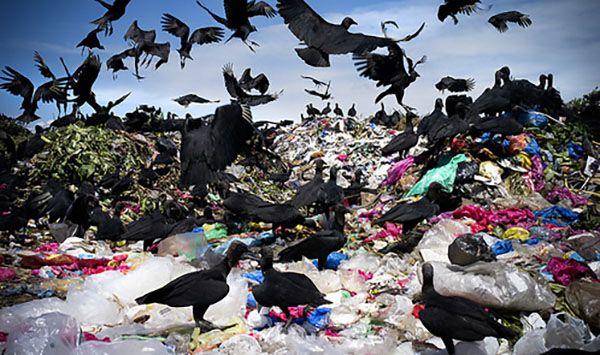 Çevre dostumsu plastik torbalar   Türkiye'nin İlk Kapsamlı Yeşil Rehberi – Sürdürülebilir Yaşam Platformu