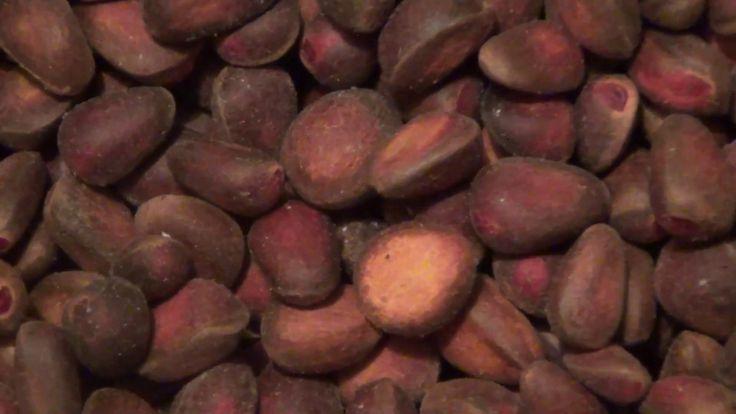 Кедровый орех куплю