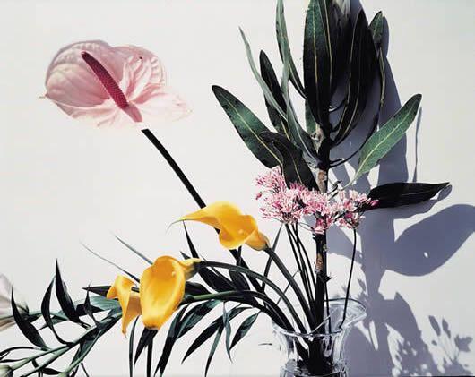 Nobuyoshi Araki, Flowers, 1997. Cibachrome print; 61 x 76cm.