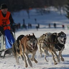 Generous snow conditions for the 25th Annual Sled Dog Races in the Harz mountain town in Germany