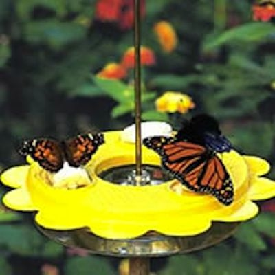 DIY Butterfly Feeder (via @BrightNest Blog)