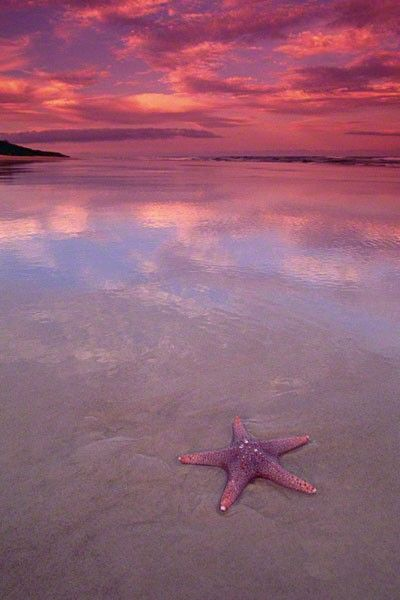 Pastel sunset on calm waves and a pink star fish.