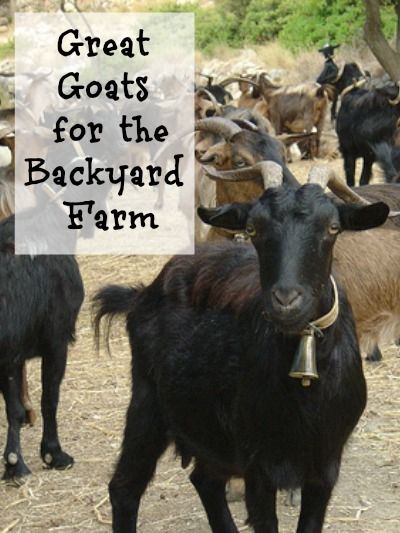 17 best images about prepared goats on pinterest