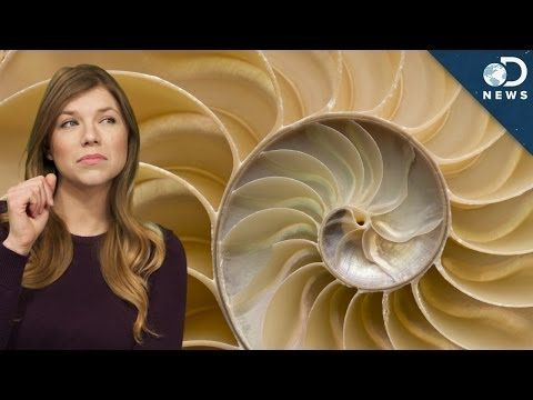 The Golden Ratio vs. The Rule of Thirds—When it comes to photography, there is a debate whether or not the Golden Ratio is better than the Rule of Thirds. Join Tara as she discusses the importance of these.
