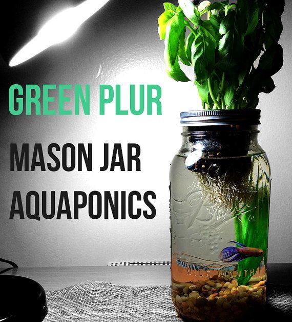 Mason Jar Aquaponics - 1/2 gallon, miniature scale, Pump-free aquaponics system.