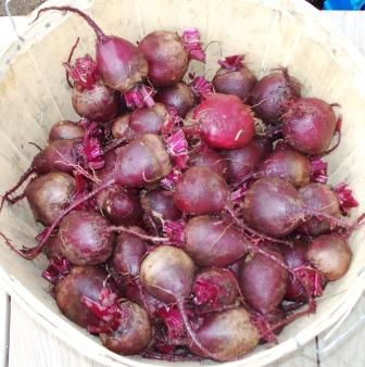 Learn How to Grow Beets - Instructions and advice for growing Beet Plants in Your Vegetable Garden