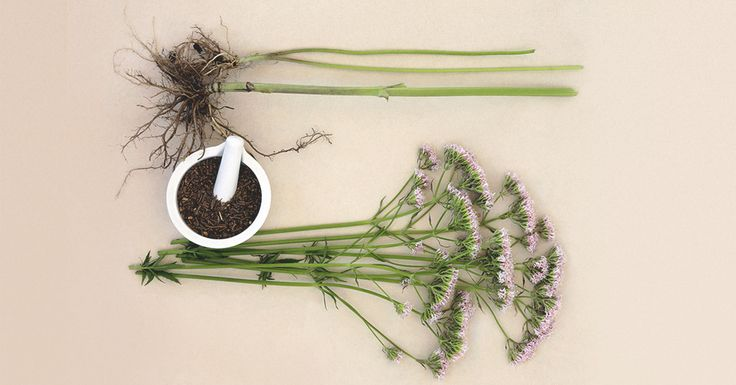 If you experience anxiety or insomnia, you might want to try taking valerian root as a remedy. Here's how much is safe to take.