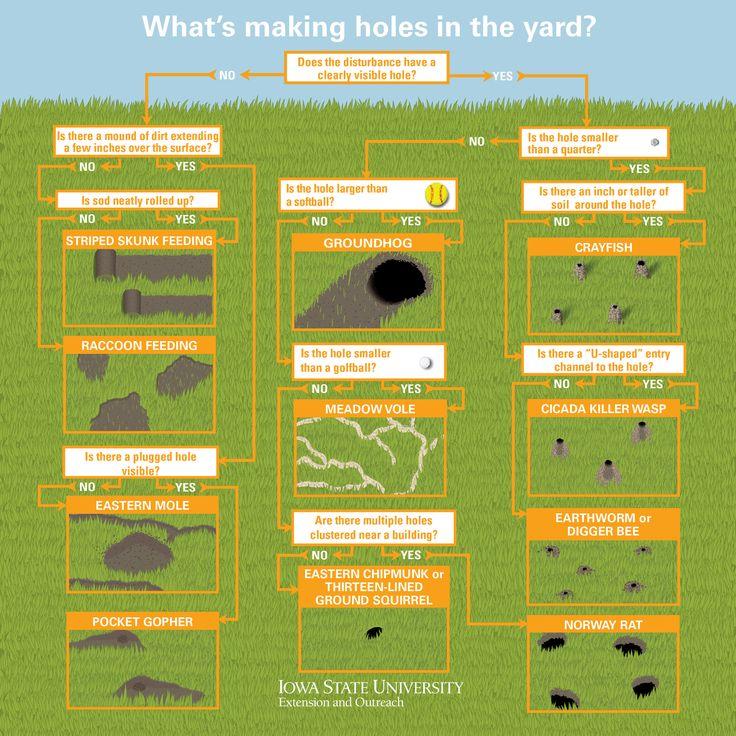 Diagnosing Holes in the Yard   Natural Resource ...