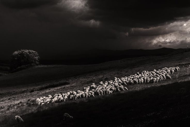 Marco Sgarbi shoots a flock of sheep and a shepherd dog, the pictures are simply mindblowing