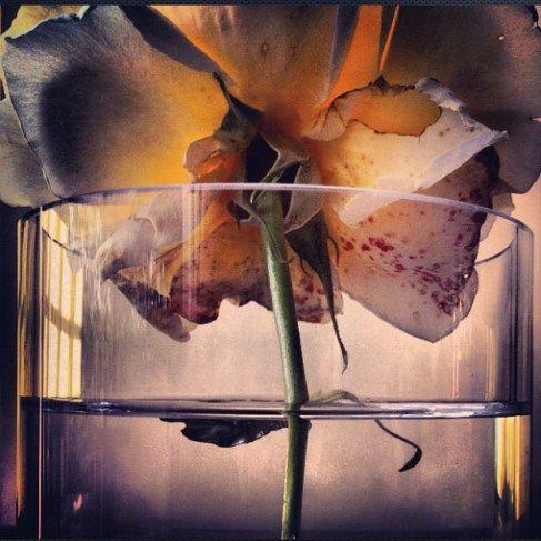 Beautiful Flowers by Nick Knight