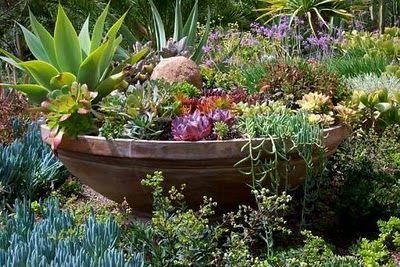 59 best southwestern landscaping images on pinterest diy landscaping ideas landscaping ideas - Succulent container gardens debra lee baldwin ...