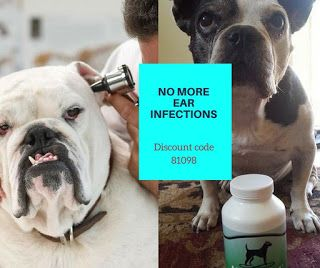 Finally a Remedy for yeast ear infections in your dog. Bulldog Ear infections no more;  Remedies for your dog's yeasty ears.
