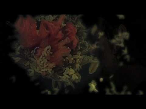 White Rose Transmission - Glittering Green - 2010