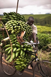Tanzania's agriculture industry