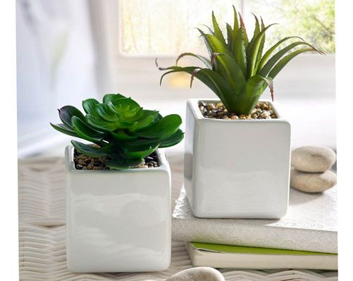 Set Of 2 Cacti