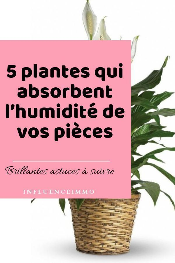 five PLANTES QUI ABSORBENT L'HUMIDITE DE TOUTES LES PIECES