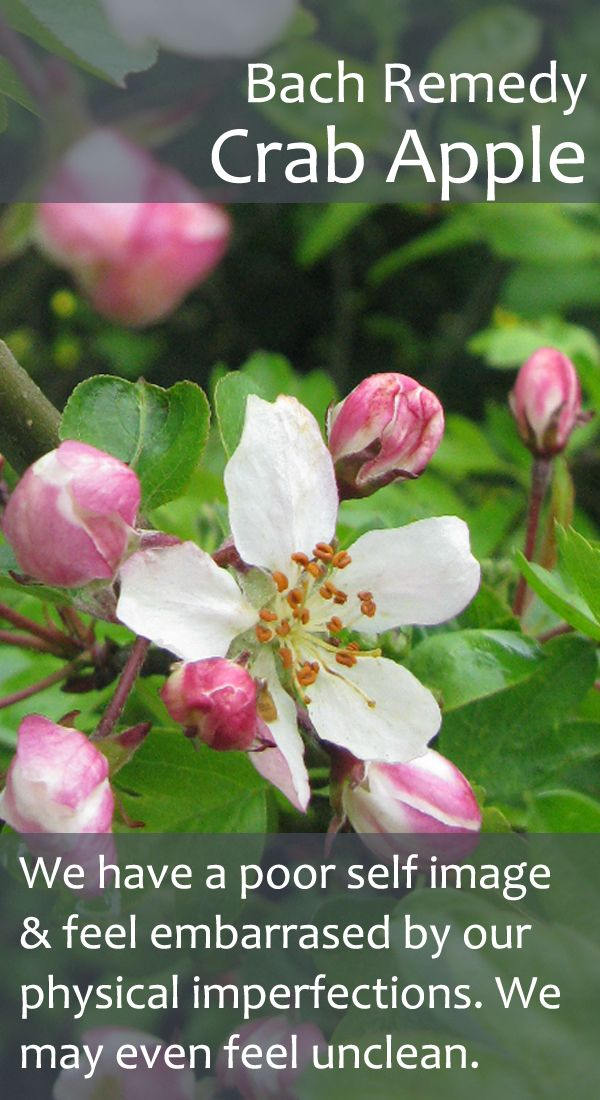 Bach Flower Remedy - Crab Apple - Also useful when we feel a bit obsessed with making the home spotless. Blossomup.nl