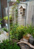 wandje gemaakt van steigerbuizen en bamboe groeit  een mooi passiebloem doorheen.