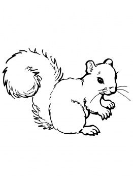 coloring pages squirrels - Google Search