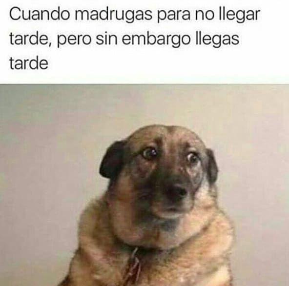 28 Memes De Perros Que Te Haran Derramar Lagrimas De Risa Funny Spanish Memes Valentines Memes Beauty Memes